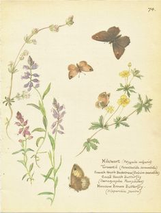 Flower incarnat livre de botanique Vintage par VickiesBeachHouse