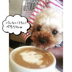 ・ 大好きな #aneacafeで ちび店長とランチ ・ ・ ラテアートで 似顔絵描いてくれた❤️ ・ ・ インカメラで撮ってる隙に ・ ・ 飲んでた ・ ・ ・ #自分のベロのとこべろでなめとる ・  #犬と行ける店 ・ ・ #Taylor83 #originaldoggoods #doggoodsshop #シンプル犬用インテリア #シンプル猫用インテリア #オリジナルプリント #お好きな文字をお入れ出来ます  #世界にたったひとつの #dogbed #catbed #犬用キャリーバッグ #猫用キャリーバッグ #cat #猫 #トイプードル #ティーカッププードル #チワワ #小型犬 #toypoodle  #teacuppoodletaylor.8352016/03/03 21:15:36