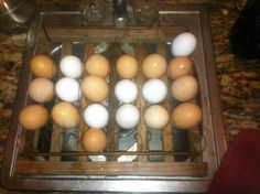 Drying eggs on the reproduction egg rack