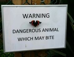 Fierce. I salute this opportunist butterfly. Via @stephenbassett on twitter