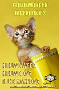 Nieuwe week maandag
