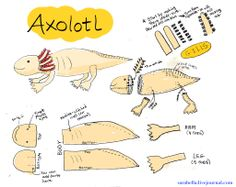 Giant Plush Axolotl... the Mexican water monster... Cute and cuddly version! - TOYS, DOLLS AND PLAYTHINGS