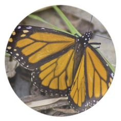 Monarch Butterfly Plate from Florals by Fred #zazzle #gift