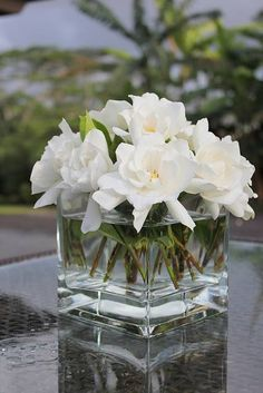 Gardenias from the garden - the classiest flower that smells gorgeous. When I finally get my own home, I will have plenty of Weeping Willow Trees and White Gardenia bushes. I will pick fresh Gardenias to do this. My Flower, Fresh Flowers, White Flowers, Beautiful Flowers, Simple Flowers, Deco Floral, Arte Floral, Gardenia Perfume, Gardenia Bouquet