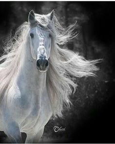 Horse with gorgeous long flowing mane. Caballo al viento