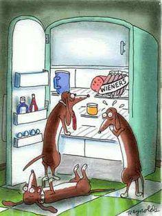 Wiener dog aka Dachshunds