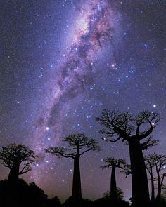 La Vía Láctea por encima de los baobabs Morondava (Madagascar)  Nuestra Vía Láctea galaxia espiral está formada por brazos majestuosos de estrellas polvo y gas. Nuestro Sistema Solar reside en uno de estos brazos externos. Cuando miramos hacia el centro de la Vía Láctea como en esta fotografía vemos una franja de luz estelar que cruza el cielo. Esto sin embargo es solo un pequeño porcentaje del total de las estrellas que la componen pues el polvo y el gas bloquean gran parte de la luz…