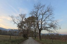 Cades Cove gets more beautiful every time we visit.