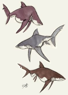 Great White by ~Polarkeet on deviantART ★ || CHARACTER DESIGN REFERENCES | キャラクターデザイン  • Find more artworks at https://www.facebook.com/CharacterDesignReferences & http://www.pinterest.com/characterdesigh and learn how to draw: #concept #art #animation #anime #comics || ★