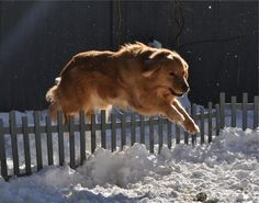 """""""Well, you should see how high the fence is I jump all the time!"""",  boasted Ember during the great escape!"""