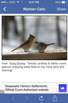 Female Cardinal and a White Crowned Sparrow