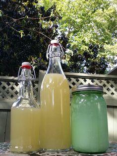 fizzy lemonade. good ginger bug care guidance.