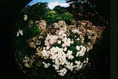 Flowers. Fish Eye camera