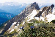 Gentian Search: Germany, Bavaria, Karwendelspitze, View of Karwendel mountains