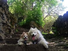 We love exploring new places. Look at this beauty! We hope you enjoyed our adventure! Until the next one! ❤️ #ablinddogandhisbestfriend ••••••••••••••••••••••••••••••••••••••• #igdogs #photographer #model #fluffy #pom #pomeranian #pomlife #rescue #dog #pups #blinddog #eskie #fluff #americaneskimo #eskie_spitz #instacool #instacute #cute #friends #ilovemydog #pawheart #viralpets #petchannel #petsofinstagram #selfie #cuteness #dogsofinstaworld #thebestlifeproject