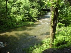 Paint Creek, TN