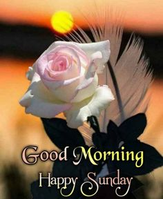 Good Morning Happy Sunday, Rose, Flowers, Pink, Roses, Royal Icing Flowers, Flower, Florals, Floral