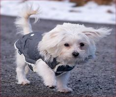 Maltese Dog Breed, Whats Good, Yorkie, Ems, Malteser, Dog Breeds, Puppies, Animals, Dogs
