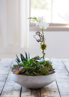 Orchid Planter ... Nature's most beautiful combination; orchids and succulents designed together in a low stone bowl. With minimal care will continue to beautify any space.
