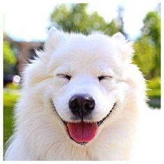 Smiling Sammy