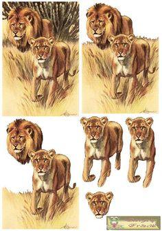 T T lions