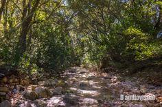 Stream by Daudiovisual. Ses Fonts Ufanes (Mallorca)