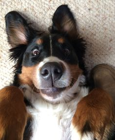 Because this is a reasonable face for a Berner to make