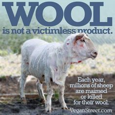 Go vegan, don't buy animal products. Give up meat and dairy. WOOL is NOT a victimless product. Each year, MILLIONS of sheep are maimed or killed for their wool. Cane Corso, Sphynx, Chinchilla, Rottweiler, Pitbull, Reasons To Be Vegan, Vegan Quotes, Vegan Memes, Factory Farming
