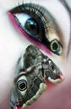 nice moth wing look