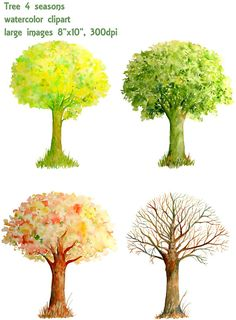 Hand painted watercolor trees four seasons spring by CornerCroft