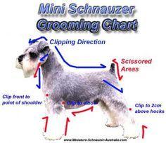 Schnoodle haircut DIY