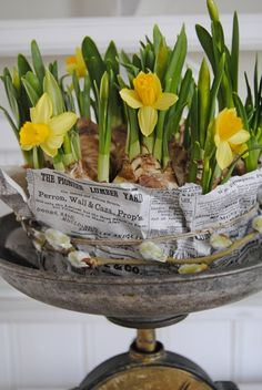 daffodils <3 all wrapped up in print, twine  with pussy willow