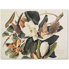 Trademark Fine Art Black-Billed Cuckoo Canvas Art by John James Audubon, Size: 35 x 47, Multicolor