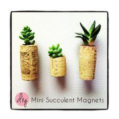 Mini Succulent Magnets - DIY