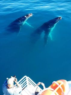 These whales seem like best friends! #WhaleWatching #HerveyBay