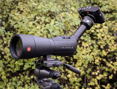 Digiscoping: Leica M240 and Leica APO Televid 82