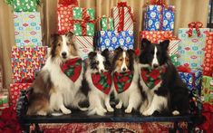 presents-shelties.jpg?utm_source=Sheltie+Nation+Subscribers&utm_campaign=d512b9e4a4-RSS_EMAIL_CAMPAIGN&utm_medium=email&utm_term=0_f235c5a63f-d512b9e4a4-87202577