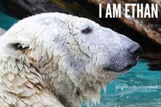 The First Day of School #6 #fiction #IAmEthan #story  Photo: Polar bear by Mark Dumont  https://www.flickr.com/photos/wcdumonts/13707526275