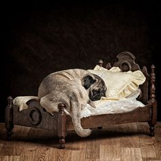 Cute Picture of Sleeping Dog