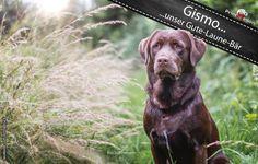 Gismo No. 2  ...unser Gute - Laune - Bär.  Wir bedanken uns bei Seda Kurmut für das tolle Bild. (Simba the King of Dogs)  #printmelion #onlinedruck #Gismo http://www.printmelion.de