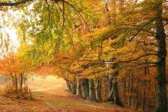 Autumn trees, Monte Canfaito, San Severino Marche (MC) - Italy
