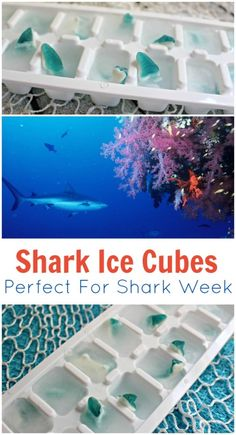 Shark Ice Cubes Recipe makes me think of Shark Week and Parties It's almost July and that means we are getting close to shark week. I love any excuse to have a party and wanted to share a cute and easy party idea. Hawaiian Luau Party, Hawaiian Birthday, Luau Birthday, Birthday Ideas, Hawaiin Party Ideas, Luau Party Ideas For Kids, Hawiian Party, Shark Week, Fete Vincent