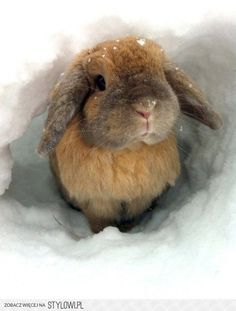 bunny in the snow.