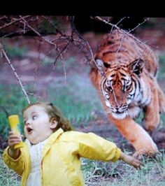 Talk about putting a tiger in your tank...more like tiger on her ass. Sign her up for the olympics !!!