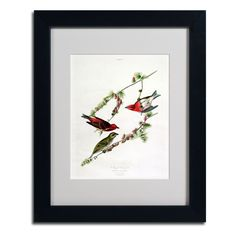 Purple Finch by John James Audubon Matted Framed Painting Print