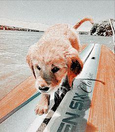Baby Animals Super Cute, Super Cute Puppies, Cute Little Puppies, Cute Little Animals, Cute Dogs And Puppies, Doggies, Baby Animals Pictures, Cute Animal Photos, Cute Pictures