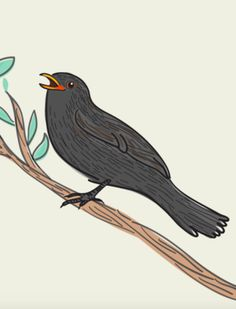 Drawing Class: Illustrator Caroline Ellerbeck explains how to get started on drawing this cheerful blackbird featured in the nature tidbit of Flow Weekly Cool Diy, Sketch Journal, Black Wings, Ink Color, Designing Women, Art Lessons, Paper Art, Birds, Graphic Design