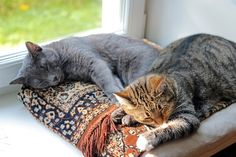 Is Adopting Another Cat The Right Choice For Your Kitty?