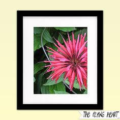 Printable wall art decor: Floral stylized photography, Bee Balm, flower art, close up, green, pink with texture by  TheFlyingHearts, $5.00