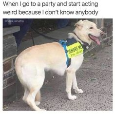 Ignore Me, Job Posting, Young Ones, You Funny, Labrador Retriever, Pets, Animals, Instagram, Introvert